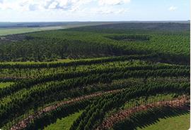 silvicultura-grupomorena-thumb