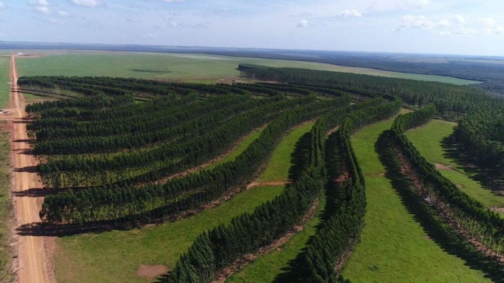 silvicultura (5)