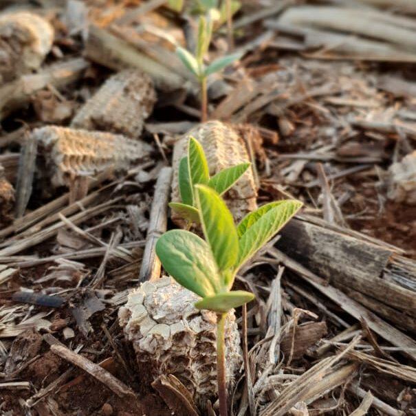 grupo-morena-agricultura6